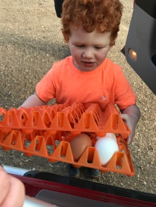 Collecting the eggs!